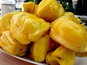 菠萝蜜真的可以下奶吗 孕妇催奶超级神器功效