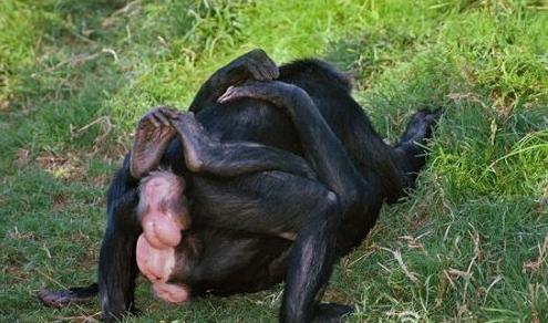 动物神话霸气图片