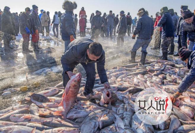50斤鱼拍出85万 天价超重大鱼被土豪拍下